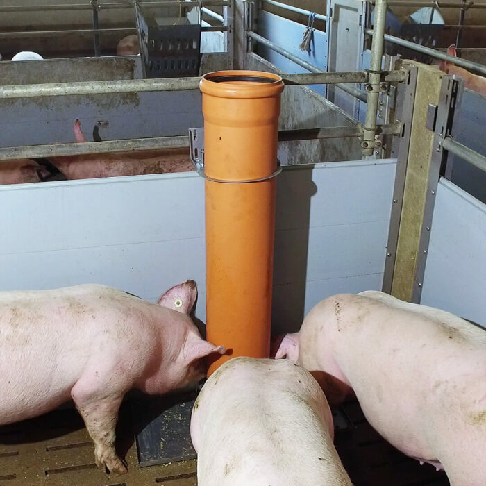 Lippert Pelletautomat Wandanbau im Stall mit Schweine beim Fressen